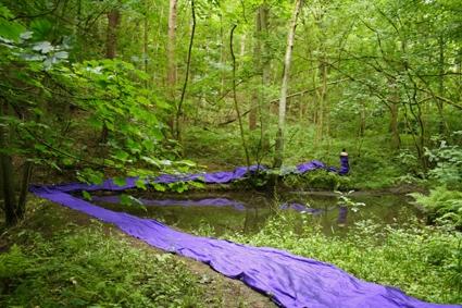 Purple Green 6, 2008