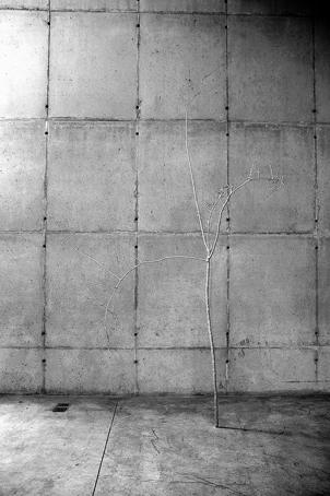Anya Gallaccio na Galeria Leme, 2006