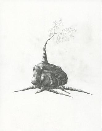 Árvore 11, 2005