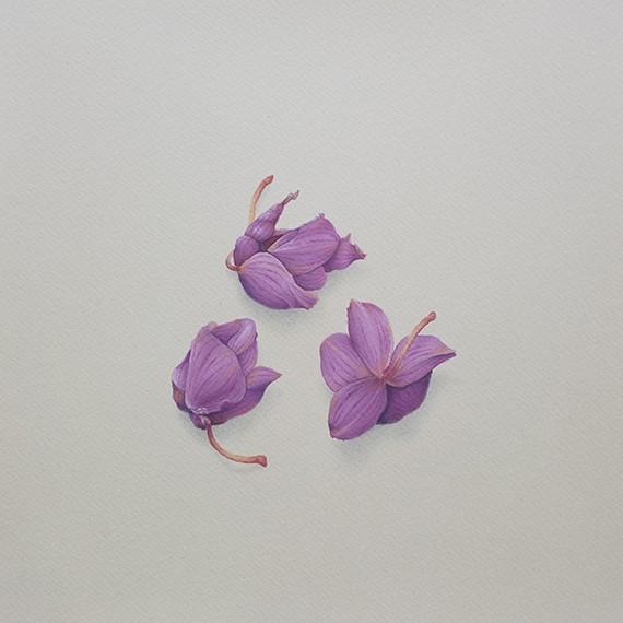 In Hortum Meum (orchidaceae flos), 2017