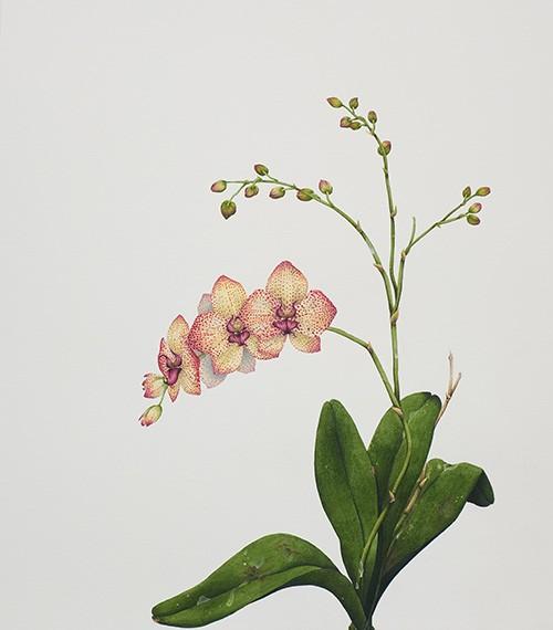 Orquídea (FeB), 2019