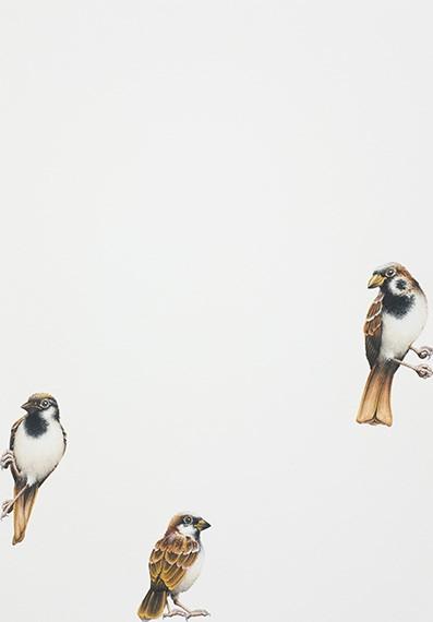 Three Little Birds (pardais), 2020