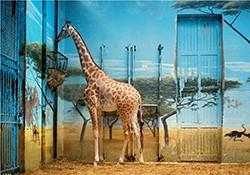 Candida-Höfer_Zoologischer-Garten-Paris-II_-1997_Photography1